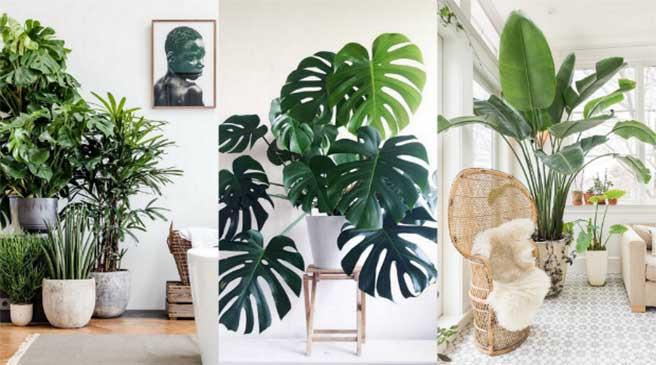 زیبایی خانه با چیدمان گیاهان