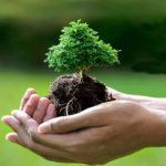 روز درختکاری ، دوستی انسان با طبیعت