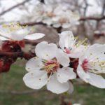 خلق رویایی شگفتانگیز در بهاری تازه