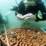 کاشی-سه-بعدی-برای-بازگرداندن-صخره-های-مرجانی